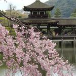 美濃吉 - 円山公園から平安神宮まで