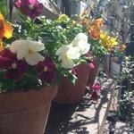 PaninoNino YOYOGI - 花たち