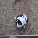 空猫カフェ - お庭に居ます