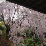 18431390 - 縁側から見える桜