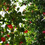 カフェ モーツァルト アトリエ - 頭上は良い感じの木陰に