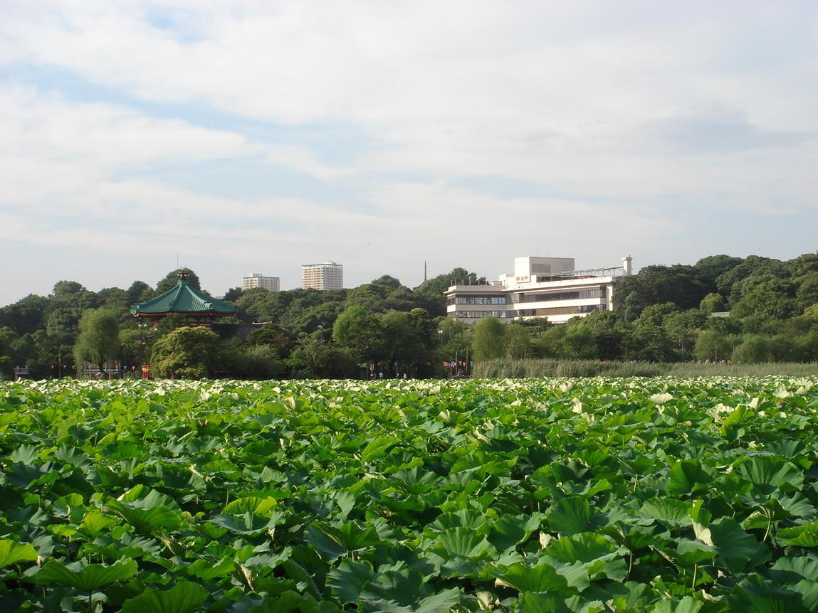 上野 精養軒 屋上 ビヤガーデン