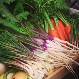 Le Salon de Legumes - 朝採れ野菜の数々