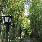 茶庵 芙蓉 - 『竹林の小径』を通って…