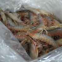 吟吟 - 底引き網漁が好調な時は、朝獲れの甘~い幻の小エビたちも召し上がれます。