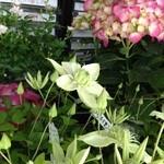 野の花 - 一階の花屋さんの花♪