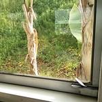 ファースト・トレイン - 窓のツマミが絶滅危惧種じゃなく『絶滅機具種』だ。