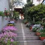 F*GICCO by F.gohan - Fごはんと同じビルの階段脇にはお花満開