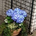 18882483 - 紫陽花の季節になりました(2013年5月)