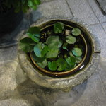 肉料理 阿蘇 - 店舗入口の水鉢