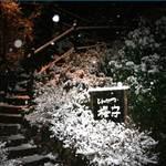 櫻守 - 冬