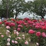 状元樓 - 5月19日ローズガーデンの薔薇