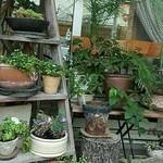 フラフィー - グリーンがテラコッタに可愛く植えられて♪*