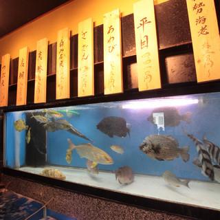 朝に直送されたお魚は店内の生簀にいるので鮮度抜群です!
