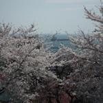 シロクマ食堂 - 2012.5.6      手宮公園の桜