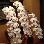 旬菜 しながわ - 女優の真矢みきさんからの開店祝いのお花だそうです。こんな巨大な胡蝶蘭を見たのは初めて!
