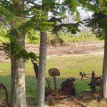 ふくろうの森 - 外には、古い遊具も^^