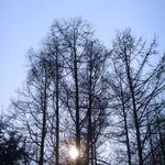 ふくろうの森 - 敷地内には大きな木がたくさん。気持がよい場所です
