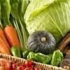 本日の野菜各種&盛合せ