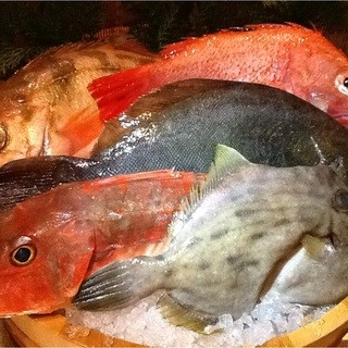 築地直送の鮮魚をお楽しめます。