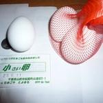 19270681 - イベントで頂いた卵です。100円玉は大きさ比較でよければ・・