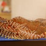 幸楽寿し - 徳島近海で獲れる新鮮な魚貝にこだわっております