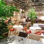 クックコープカフェ - 中の大きなグリーンはチャメという種類です。日光はなかなか浴びれないのだけど元気に育ってます。