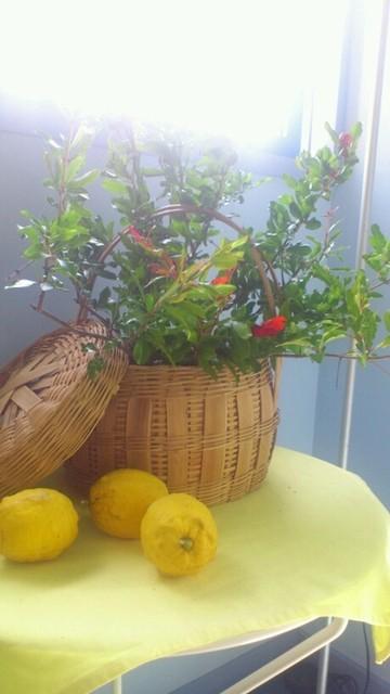Cafe DEN - 季節のお花