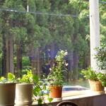 喫茶ラヴェンダー - 窓からの外の森の景色