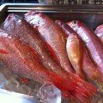 魚ダイニング光 - 料理写真:泉州沖で水揚げされる魚を中心に築地市場始め、全国各地から魚が入荷致します。