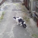 又兵衛 - 2013.6 横丁を入ると猫がお出迎え 奥に見えるのが共用WC