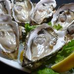 Oyster Bar ジャックポット - 美味しい牡蠣が各地から続々入荷中