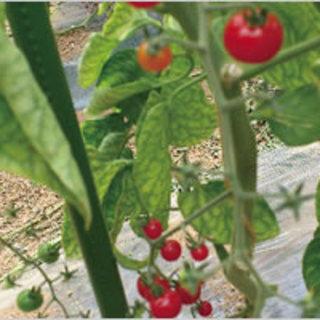 谷川農園の野菜・果物