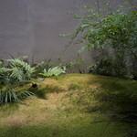 遊形 サロン・ド・テ - 坪庭