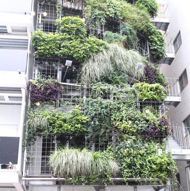 グリグリ - 草木に覆われたビル、良い目印になりますね