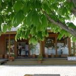 エルバート - お店の前に大きな栃の木