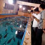 ざうお - 魚影は濃い。ほとんどが鯛というのも、贅沢な話だ