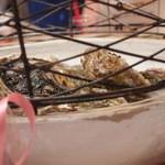 スパイラル - 岩牡蠣がディスプレイされてます