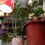 タマエテント - 植物たち