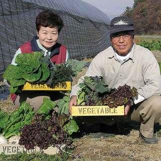 産地地消の新鮮野菜が味わえる!