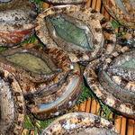 珊瑚礁 - ★【クロアワビ】 エサになる海藻豊かな南紀の海で育った肉厚上質の味覚を。