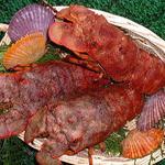 珊瑚礁 - ★【クツエビ】 美味希少、歯応え・旨み&甘み濃厚なのがクツエビの特徴です。<数量限定>