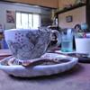 ほのぼの村 - 料理写真:ホットコーヒー