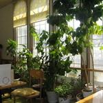 健康食工房 たかの - 自然食穀菜食・マクロビオティック「たかの」の緑が心地よい店内