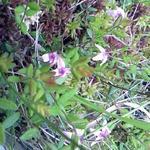 19961302 - 南浜湿原の花