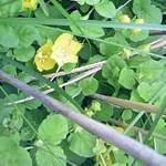 19961316 - 南浜湿原の花