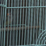 丸八亭 - 入口付近の小鳥