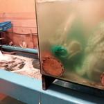 銀座魚ばか はなれ - 入ってすぐの生け簀&水槽