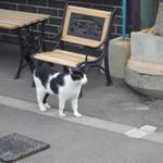 20026555 - 看板猫