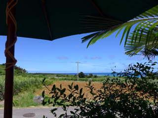 パーラーみんぴか - カウンター席にて。さとうきび畑の向こうにはニシ浜。はてるまブルーが広がる